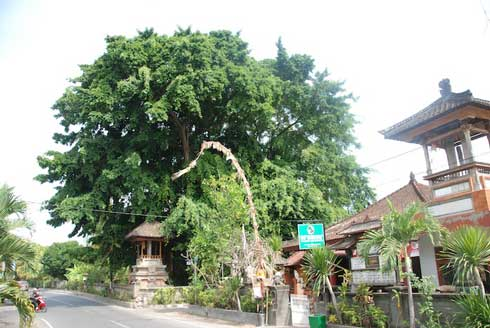 blanjong sanur outside-small